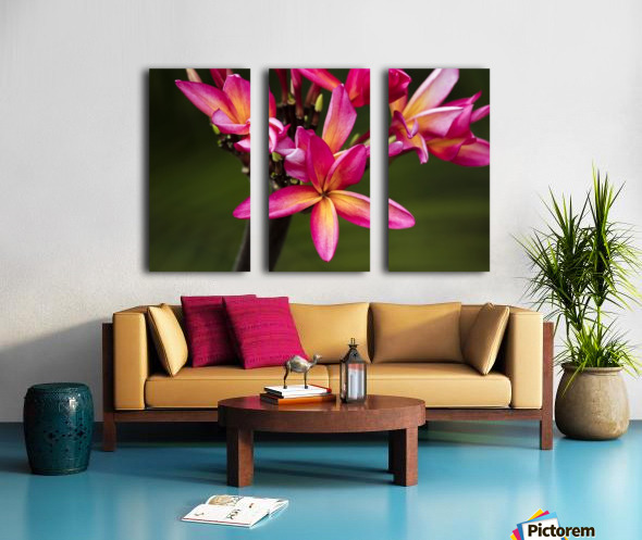 Close-up of bright pink plumeria flowers; Maui, Hawaii, United States of America Split Canvas print