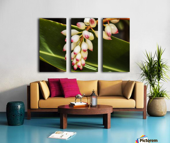 Close-up of white ginger flower Alpinia; Maui, Hawaii, United States of America Split Canvas print