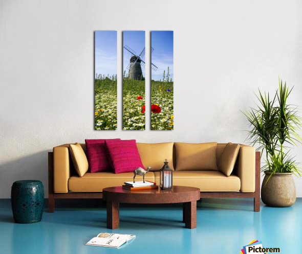 A windmill against a blue sky and cloud with a field of wildflowers in the foreground; Whitburn, Tyne and Wear, England Split Canvas print