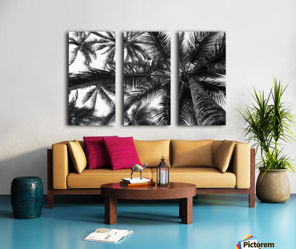 Low angle view of coconut palm trees in black and white; Honolulu, Oahu, Hawaii, United States of America Split Canvas print