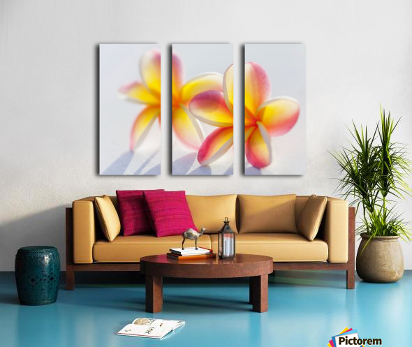 A pair of beautiful yellow and pink Plumeria flowers together (Apocynaceae) on a white background; Honolulu, Oahu, Hawaii, United States of America Split Canvas print