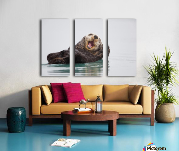 Sea Otter Floating On Back Scratching Head And Yawning, Prince William Sound, Southcentral Alaska, Winter Split Canvas print