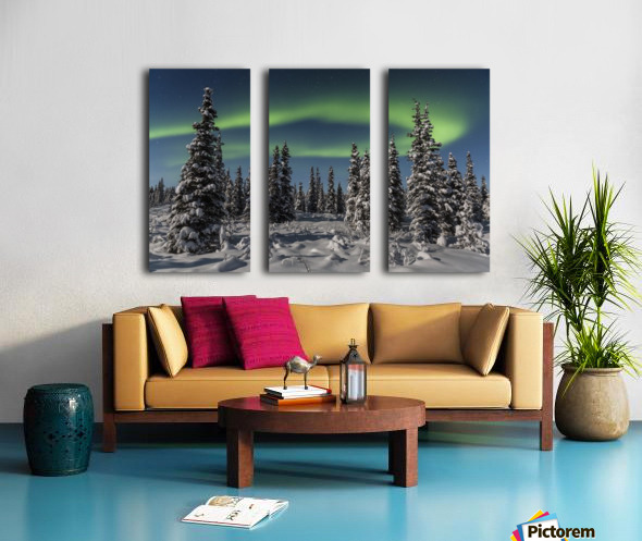 Green Aurora Borealis dances over the tops of snow covered black spruce trees, moonlight casting shadows on a clear winter night, interior Alaska; Gakona, Alaska, United States of America Split Canvas print