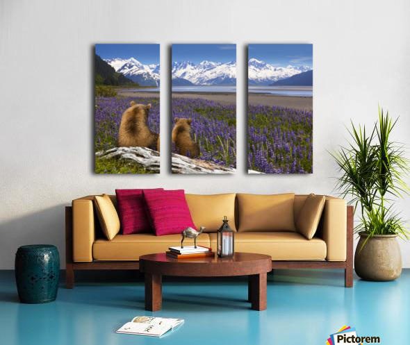 COMPOSITE: Grizzly Sow & cub sit in lupine along Seward Highway, Turnagain Arm, Southcentral Alaska Split Canvas print