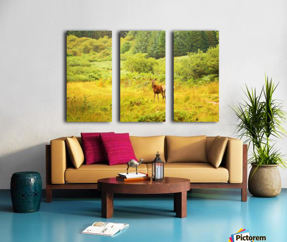 Caught in the open Split Canvas print