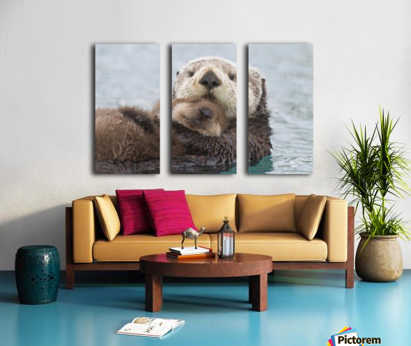 Female Sea Otter Holding Newborn Pup Out Of Water, Prince William Sound, Southcentral Alaska, Winter Split Canvas print