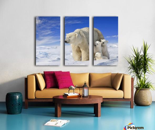 View Of Polar Bear Sow (Ursus Maritimus) With Her Triplet Cubs On The Wind Swept Plains Of Wapusk National Park, Manitoba, Canada, Winter, Composite Split Canvas print