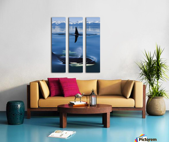 Composite: Close Up Of Orca Whales As They Surface In Lynn Canal With The Coast Range Mountains In The Background, Inside Passage, Southeast Alaska Split Canvas print