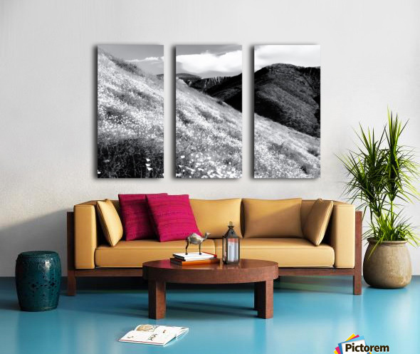poppy flower field with mountain and cloudy sky background in black and white Split Canvas print