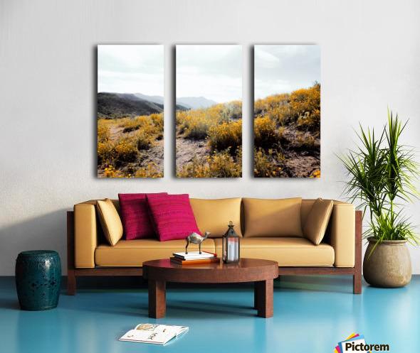 vintage style yellow poppy flower field with summer sunlight Split Canvas print