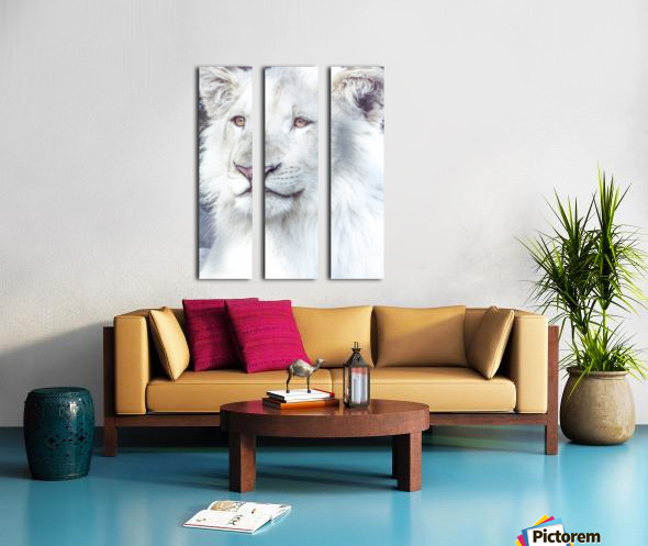 Juvenile White Lion  Split Canvas print
