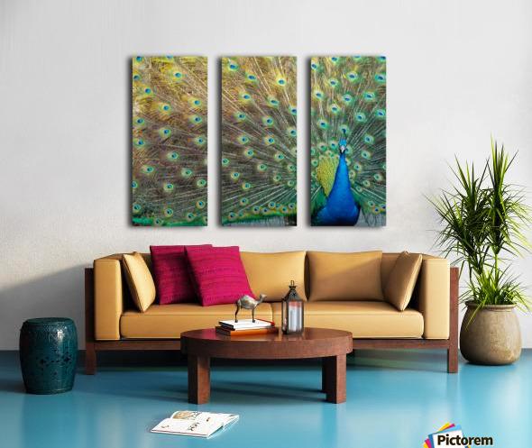 Peacock Feathers Full Frame Split Canvas print