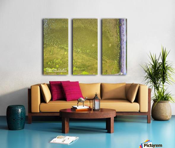 Fish Pond Algae Split Canvas print