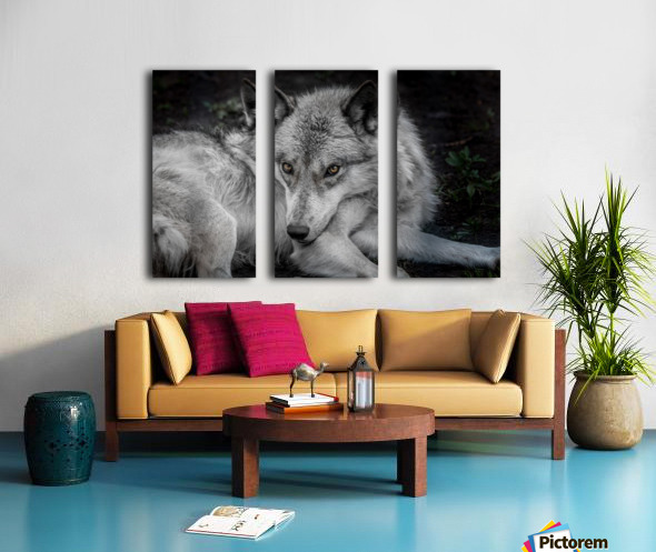 WolfDog Split Canvas print