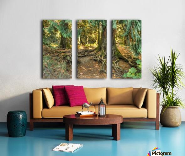 Roots  Split Canvas print