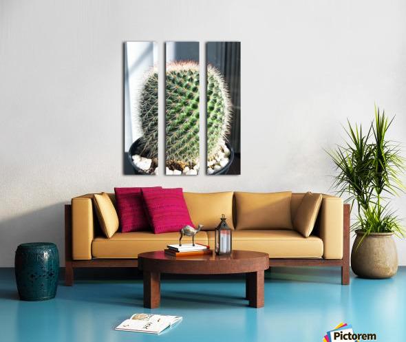 closeup green cactus texture with morning sunlight Split Canvas print