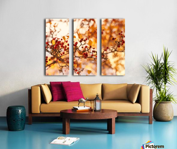 Winterberries in golden light Split Canvas print