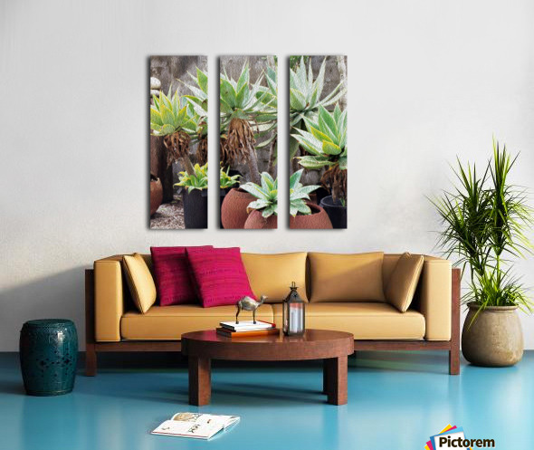 Potted Agave Plant Split Canvas print