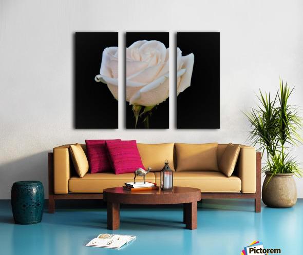 Calming rose Split Canvas print