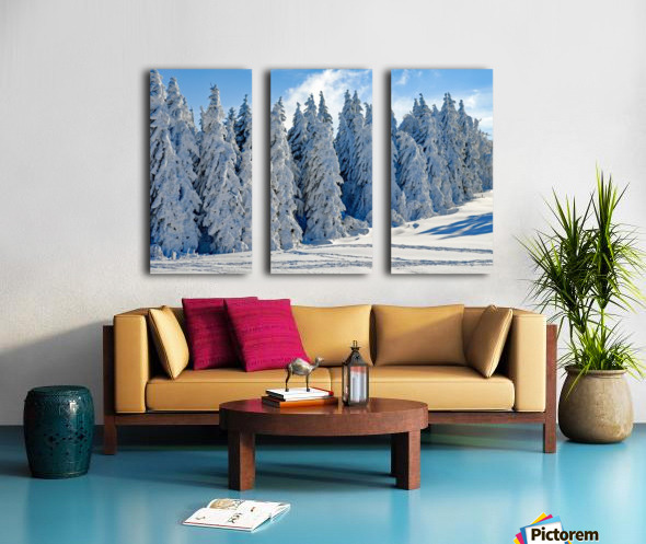 Snow  Crusted Trees Rocky Mountains Split Canvas print