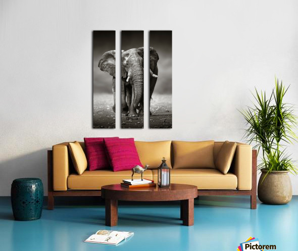 Elephant approach from the front Split Canvas print
