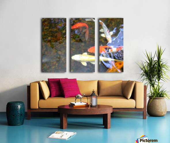 Koi Fish In Home Pond  Split Canvas print