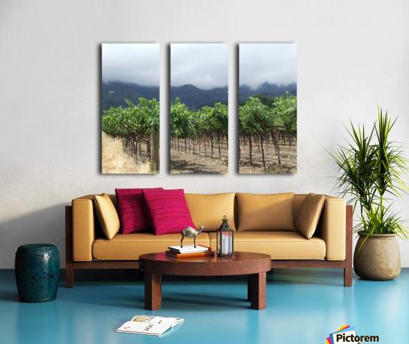 Napa Califoria Grape Vines summer 2007  Split Canvas print