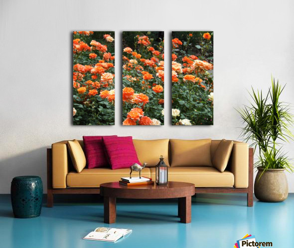 Orange Flowers Growing in Napa Califoria  Split Canvas print