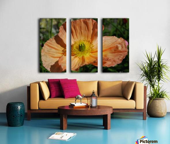 A Poppy Flower Growing Split Canvas print
