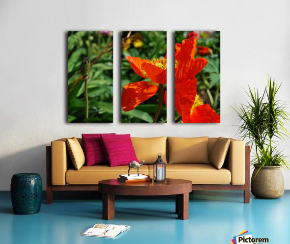 Orange Poppy Flowers Growing Split Canvas print