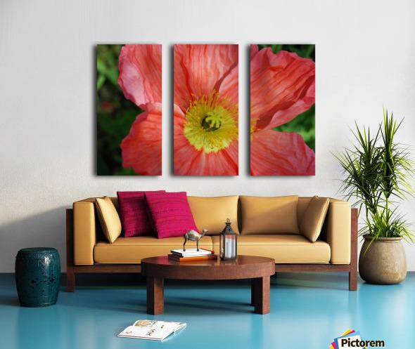 Poppies Growing in A Garden Split Canvas print