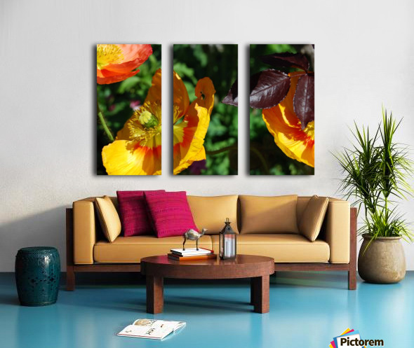 Yellow Poppies Growing in a Garden Split Canvas print