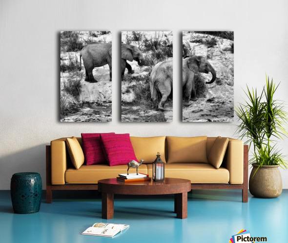 Elephant Youth Split Canvas print