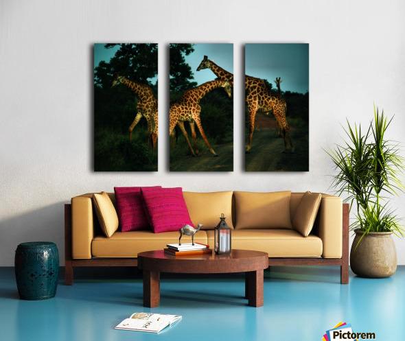 Giraffes South Africa Split Canvas print