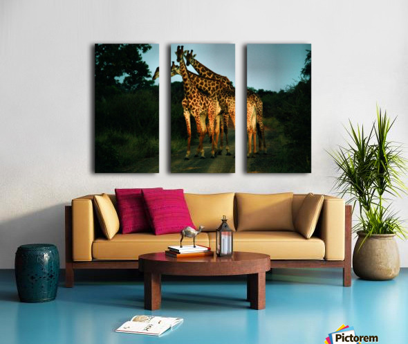 Giraffes Split Canvas print