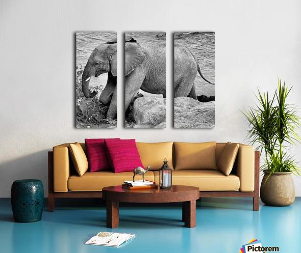 Elephant Baby Split Canvas print