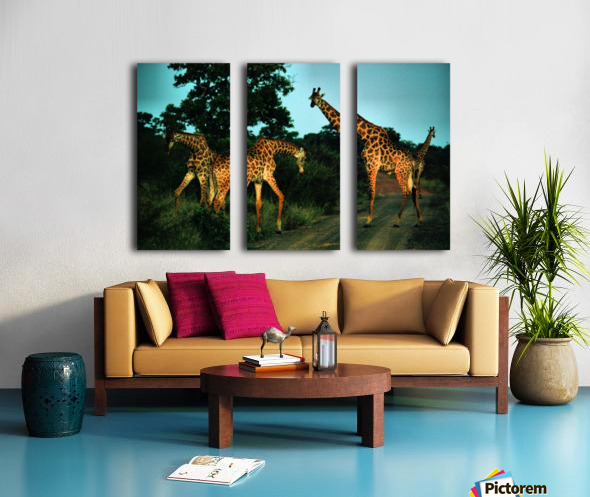 Giraffes at sundown 2 Split Canvas print