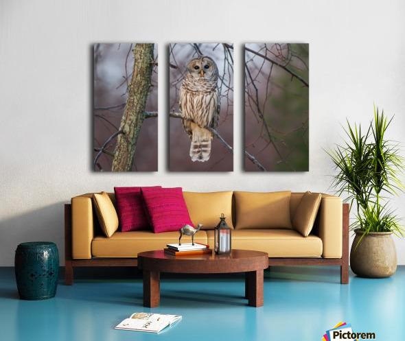 Barred Owl at sunrise. Split Canvas print