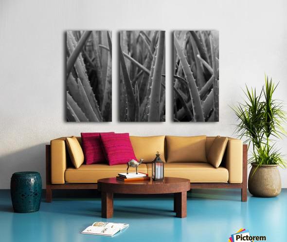 Aloe Split Canvas print