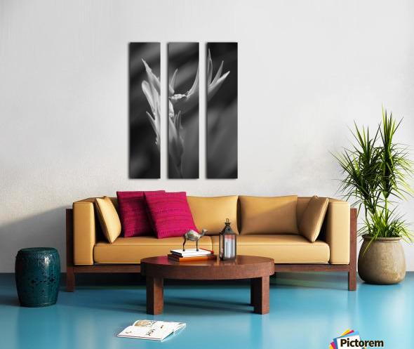 Claw Split Canvas print