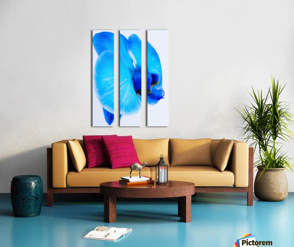 ORCHIDÉE BLEUE Split Canvas print
