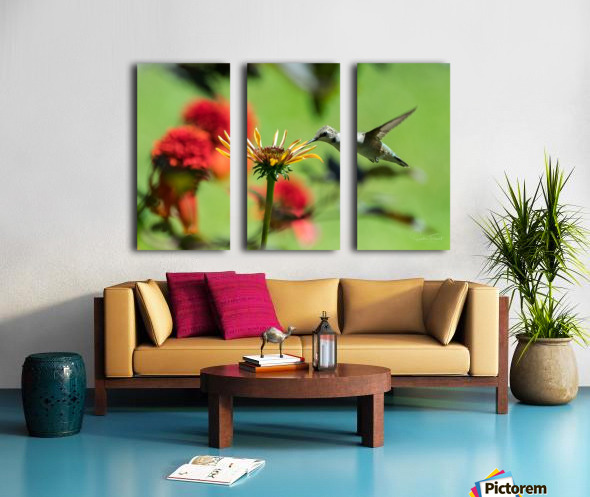 Colibri butinant Split Canvas print