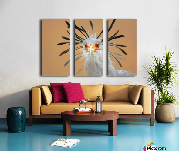 Secretary bird portrait close-up head shot Split Canvas print