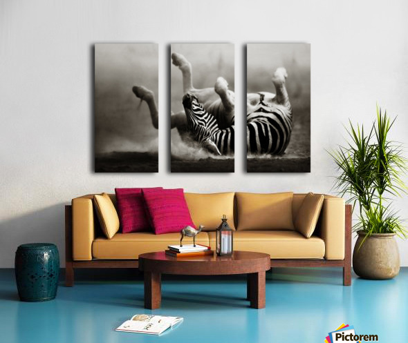 Zebra rolling in the dust Split Canvas print