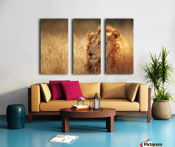 Lion in grassland Split Canvas print