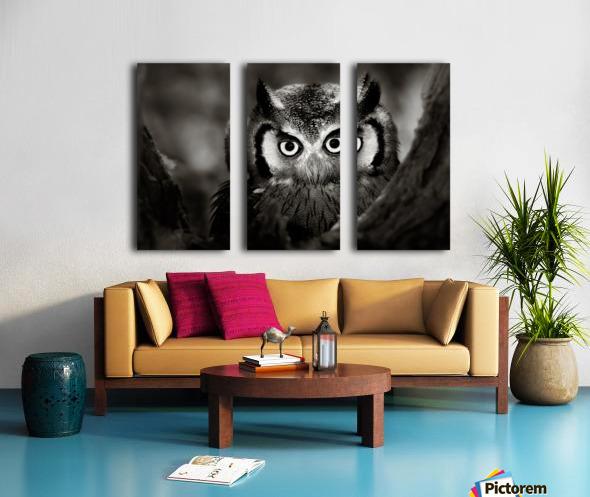 Whitefaced Owl close-up Split Canvas print