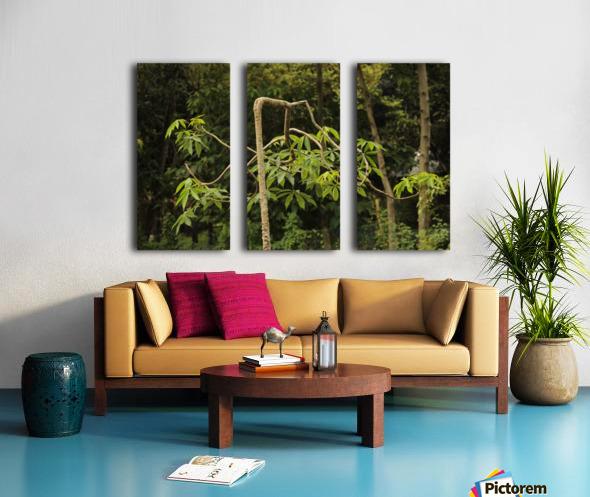 IMG_8130 Split Canvas print