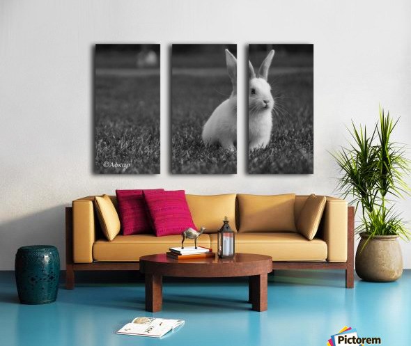 Lovely Rabbit Split Canvas print