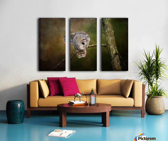 Barred Owl Eyeing Prey. Split Canvas print