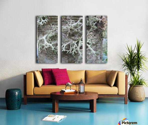 Bark With Lichen 02 Split Canvas print